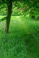 Mown path through rough grass. Hardwicke House, Fen Ditton.