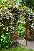 Wrought iron gate in brick wall with Clematis montana. The Shade Garden, Wollerton Old Hall, Shropshire