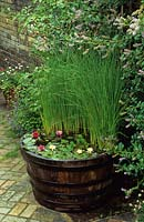 Miniature water lilies and bulrush in wooden half barrel. Typha minima, Nymphaea 'Pygmaea Helvola', Nymphaea 'Pygmaea Rubra'
