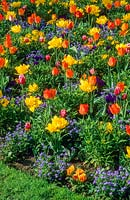 Mixed spring border. Tulipa 'Monte Carlo' - double yellow, Tulipa 'General De Wet' - orange, forget me not, wallflowers and pansies. Cambridge City Council. April