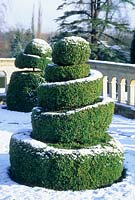 Topiary buxus spiral with snow. February. Madingley Hall, Cambridge
