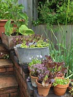 Onions, thyme, viola and lettuce in pots by steps. Alys Fowler's 18m x 6m, organic garden. Productive and pretty, a mix of fruit, herbs, flowers and vegetables thrive.