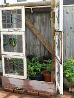 Tomato plants in improvised greenhouse made from stained glass window panels rescued from a rubbish skip. Alys Fowler's 18m x 6m, organic garden.