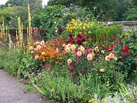 Mixed border with Helenium 'Moerheim Beauty', verbascum, penstemon, monarda, mallow, crocosmia, sisyrinchium, phlox and Dahlias 'Requiem', 'Ludwig Helfert', 'Spartacus'.