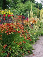 Mixed summer border with Helenium 'Moerheim Beauty', verbascum, monarda, crocosmia, echinops, heliopsis, scabious and Dahlias 'Bishop of Llandaff' and 'Ludwig Helfert'.