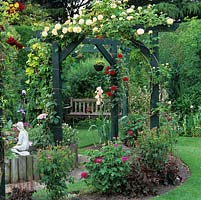 Extended pergola gives privacy from neighbours. Golden Rosa Alchymist, American irises, sisyrinchium, Rosa de Rescht, clematis and pinks.