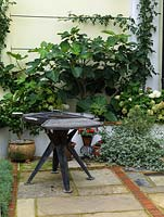 Barbecue stands beside raised bed planted with fig tree and Hydrangea arborescens 'Annabelle'. Reclaimed brick and stone floor surface.