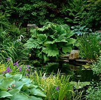 Gunnera manicata reflected into wildlife pond, edged in  hostas, ferns and irises - flag and Sibirica. Heron statue.