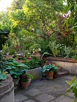 View to patio of 30m x 8m back garden, past old water tank and pots of hostas, holly and pelargonium, to raised bed of smokebush, cardoon, poppy and orlaya under old sumach.