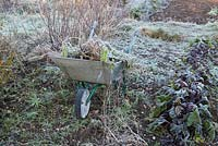 Frosty wheelbarrow with rubbish at end of season