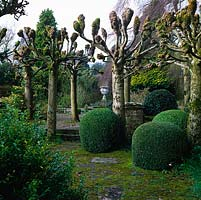 Topiary balls vie with avenue of pollarded limes, framing view of urn in walled garden beyond.