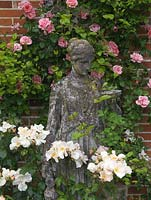 Statue flanked by Rosa 'Sally Holmes'. Behind on wall, pink Rosa 'Mdme Gregoire Staechelin'.