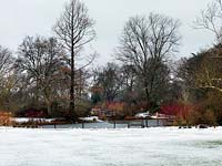 The lake at RHS  Wisley in snow, with flaming winter stems - dogwood and willow at the edge.