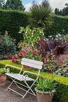 A bench in the Exotic Garden at Abbeywood features box edged borders planted with Nicotiana, Hemerocallis Dahlia, Datura, Canna and Geranium maderense with Cordyline australis behind.