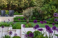 Town garden designed by Kate Gould. Box balls interplanted with purple and white allium, a raised terrace with two chairs beneath a magnificent holm oak. Boundary beds are filled with bamboo, cordyline, acer, olive tree, pittosporum, Trachycarpus fortunei, hosta and euphorbia.