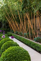 Stone path edged in a line of box balls, a box hedge, and a raised bed of hostas beneath tall golden bamboo - Phyllostachys aureosulcata f. aureocaulis