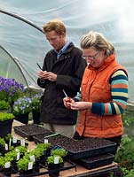 Jack Willgoss and Laura Crowe at their nursery, in the polytunnel naming and propagating perennial violas from stock plants. Laura prepares the cutting material, whilst Jack writes labels for each variety.