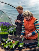 Jack Willgoss and Laura Crowe at their nursery, in the polytunnel naming and propagating perennial violas from existing plants. The cuttings are inserted into trays of free draining compost - a mix of multipurpose and perlite.