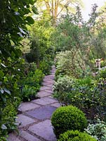 Tunnel-like path of concrete slabs laid diagonally, the gaps filled with gravel. Edged in euphorbia, daphne, hellebore, bay, elder, fern, dogwood, sarcococca, box, epimedium.
