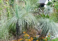 Xanthorrhoea glauca - Grass Palms underplanted with Gazania - The 'I'll Drink to That' Garden - RHS Hampton Court Palace Flower Show 2007