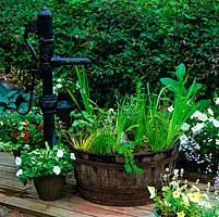 Wooden half barrel, fed by old cast iron pump, is planted with aquatic irises and grasses, on deck amidst pots of white-flowered petunia and lobelia.