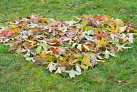 Planting a snowdrop heart - Mark out a heart shape on lawn with fallen autumn leaves