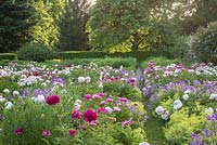 The peony borders cover a large surface at Weihenstephan Trial Garden