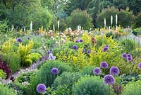 At the Weihenstephan Trial Garden, the view is from a colour themed violet and yellow border to the Kniphofia slope - Allium 'Lucy Ball',  Eremurus, Ligustrum ovalifolium 'Aureum'