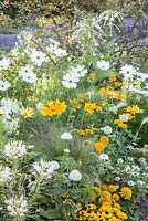 Colour themed border with Cleome spinosa, Cosmos, Nicotiana sylvestris, Panicum virgatum 'Fontaine', Rudbeckia hirta 'Prairie Sun', Zinnia angustifolia 'Crystal White' and Zinnia angustifolia 'Crystal Yellow'