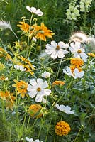 Detail of colour-themed yellow, white and orange border with annual flowers and grasses including cosmos, Pennisetum villosum, Rudbeckia hirta 'Prairie Sun' and zinnia