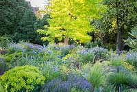 The bright leaves of Robinia 'Frisia' dominate the violet, yellow and purple border with drought resistant perennials and ornamental grasses in the Weihenstephan Trial Garden