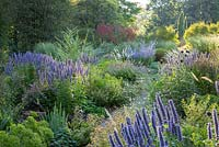 Garden path through colour themed violet, yellow and purple border at Weihenstephan Trial Garden with Agastache 'Blue Fortune'