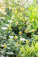 Detail of white and yellow border at Weihenstephan Trial Garden with Dahlia 'Honka Yellow' and Nicotiana