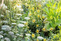 Detail of the white and yellow border at Weihenstephan Trial Garden with annuals, Dahlia 'Honka Yellow', Ammi majus and Nicotiana