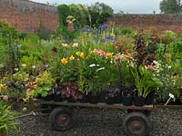 Plants loaded onto a cart at Mynd Hardy Plants, specialist Hemerocallis and perennial growers.