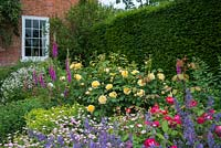 Rosa 'Charlotte' in mixed border with geraniums, nepeta, alchemilla, gillenia and foxgloves. June.
