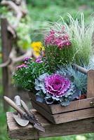 Autumn assemblage with ornamental cabbage, Festuca, Hedera, oak trug, tools and Carex