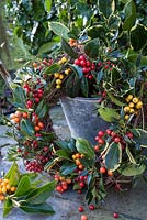 Ilex - Holly wreath with different coloured berries
