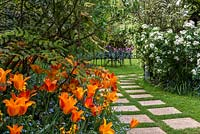Spring border of Tulipa 'Ballerina' and 'Lily Fire' beside a stepping stone path in the lawn.
