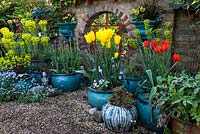 Pots of Tulipa 'West Point', 'Ballerina', 'Black Parrot' with self-seeded forget-me-nots, euphorbia and pansy in front of mirrored window wall.
