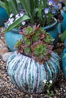 Glazed pot created by ceramicist Susan Bennet, planted with succulents.