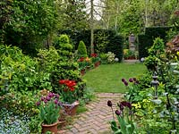 Long, thin 50m x 9m town garden. Path edged in daffodil, box, forget-me-not, comfrey, skimmia. Pots of tulips - Arabian Mystery, Abu Hassan, Prinses Irene, Negrita, Black Jewel.