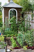 A small raised vegetable garden on two levels planted with Cos and Lollo Rosso lettuce, pea Kelvedon Wonder, runner bean Scarlet Emperor, broad bean Bunyard's Exhibition, raspberries, blackcurrants with Tagetes to deter common insect pests.