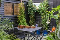 A dining area surrounded by containers planted with Datura, Strelitzia, Passiflora