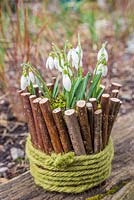Galanthus planted within a natural container made of sticks