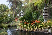 Clivia miniata around the pond in the Oriental garden at Monte Palace Tropical Garden, Madeira, with Japanese pagodas and lanterns