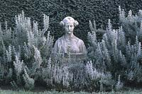 Bust of woman's head, between rosemary with frost in December