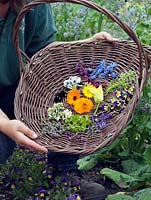 Jo Campbell with a basket of freshly picked edible flowers to include borage, marigold, courgette, thyme, lavender