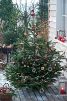 Christmas tree on terrace - Abies nordmanniana - Nordic fir adorned with decorative rings and other seeds for bird food.  Apple slices, peanuts and cereal ears