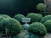 A classical stone planter surrounded by frosted box balls, in front of a deep green yew hedge.